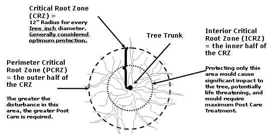 Critical Root Zone Technical Recommendation From Urban