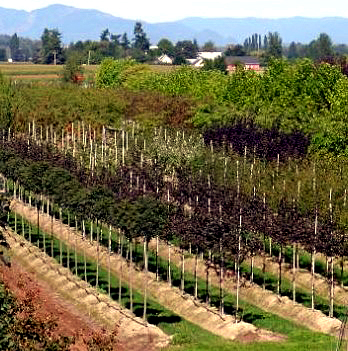 View Of Urban Forest Nursery Inc